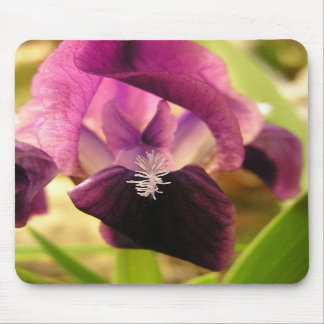Iris Splendor mousepad
