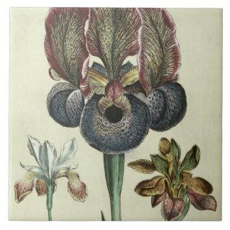 Iris susiana major and Iris bisantina angustifolia Tile