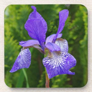 Iris sybirica coaster