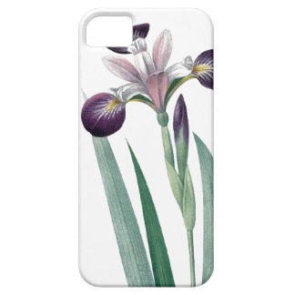 Iris tricolor vintage Redoute illustration Case For The iPhone 5
