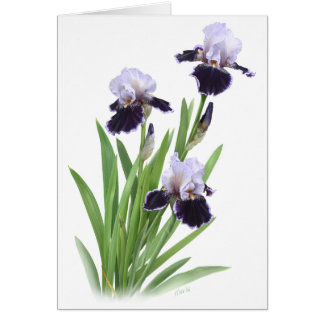 Iris Trio Greeting Card