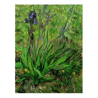 Iris Vincent van Gogh, Vintage Garden Flower Postcards