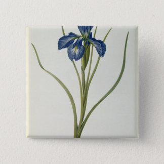 Iris Xyphioides, from `Les Liliacees', 1808 15 Cm Square Badge
