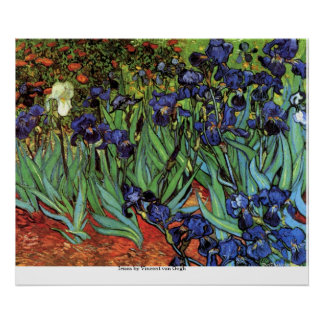 Irises by Vincent van Gogh Poster