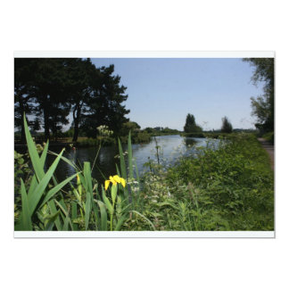 Irises growing on river bank at Canal Bank, Exeter Announcements