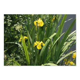 Irises growing on river bank at Canal Bank, Exeter 13 Cm X 18 Cm Invitation Card