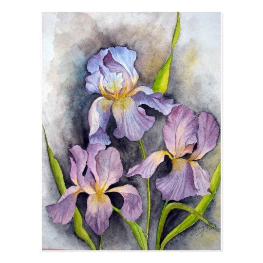 Irises Postcard