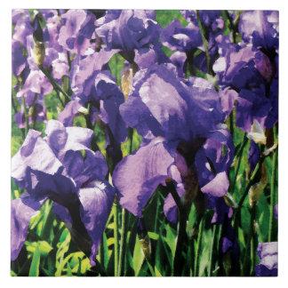 Irises Princess Royal Smith Large Square Tile