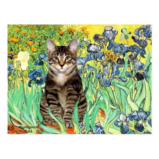 Irises - Tabby Tiger cat 30 Postcard