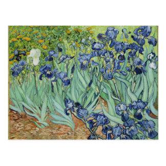 Irises - Van Gogh Postcard