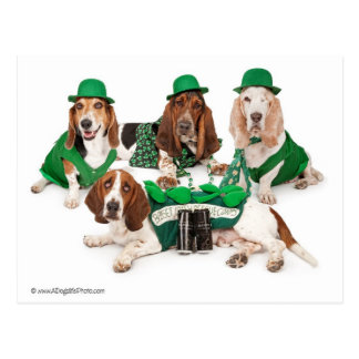 Irish Basset hound quartet Postcard