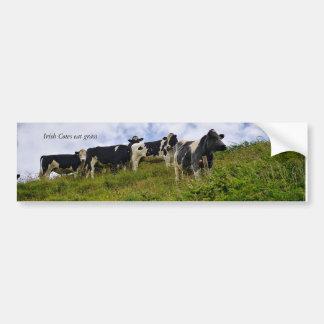 Irish Cows Bumper Sticker