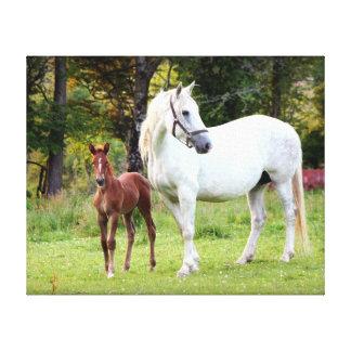Irish Draft Horse Canvas Print