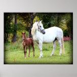 Irish Draft Horse Poster