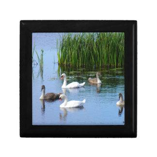Irish ducks on the River Shannon Small Square Gift Box