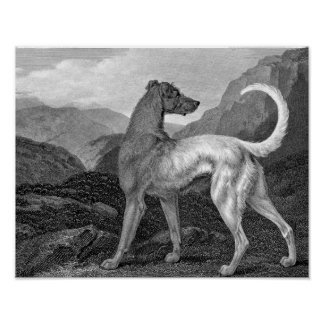 Irish Greyhound Dog Print