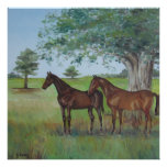 Irish Horses By Joanne Casey Posters