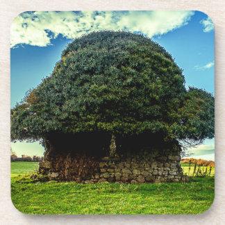 Irish Mushroom House Coaster