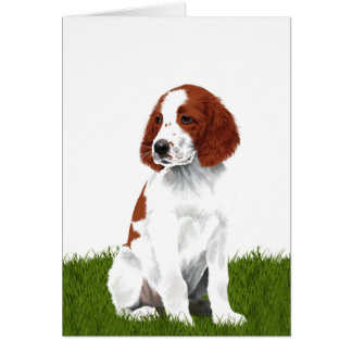 Irish Red and White Setter Puppy Greeting Card