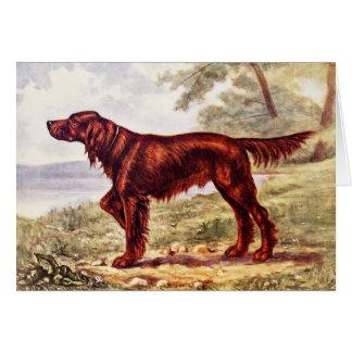 Irish Setter 1900 Illustration of Sporting Dog Card