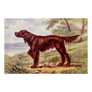 Irish Setter 1900 Illustration of Sporting Dog Poster