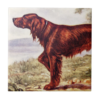 Irish Setter 1900 Illustration of Sporting Dog Tile