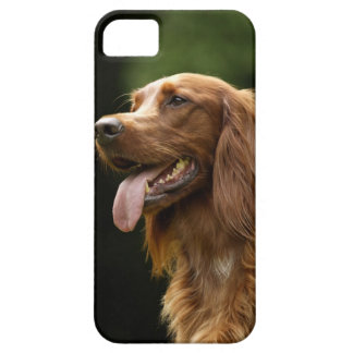 Irish Setter 2 Case For The iPhone 5