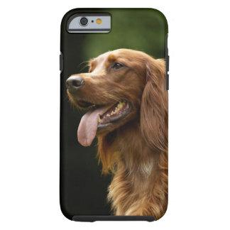 Irish Setter 2 Tough iPhone 6 Case