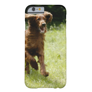 Irish Setter Barely There iPhone 6 Case