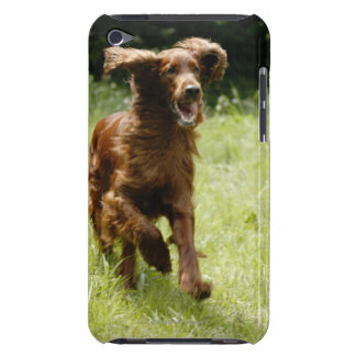 Irish Setter Barely There iPod Covers