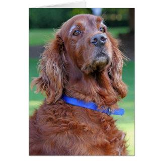 Irish Setter dog beautiful photo blank note card