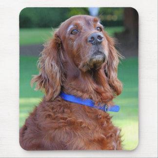 Irish Setter dog beautiful photo portrait, gift Mouse Mat