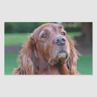 Irish Setter dog beautiful photo portrait, gift Rectangular Sticker