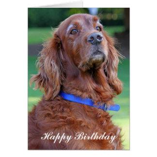 Irish Setter dog happy birthday greetings card