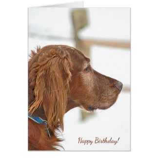 Irish Setter in snow for birthday Card