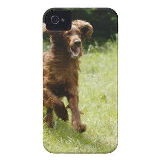 Irish Setter iPhone 4 Case-Mate Case