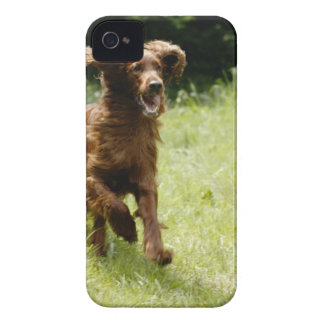 Irish Setter iPhone 4 Cover