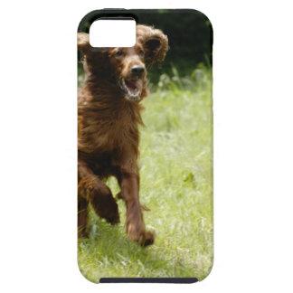 Irish Setter iPhone 5 Case