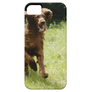 Irish Setter iPhone 5 Cover