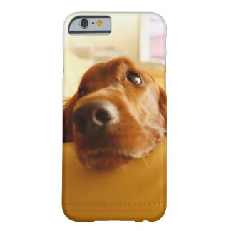 Irish Setter on sofa Barely There iPhone 6 Case