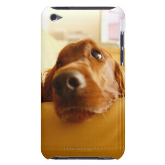 Irish Setter on sofa Barely There iPod Cover