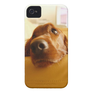 Irish Setter on sofa iPhone 4 Case