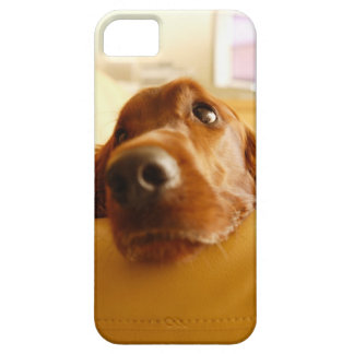 Irish Setter on sofa iPhone 5 Cover