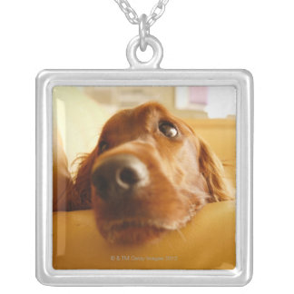 Irish Setter on sofa Silver Plated Necklace