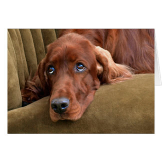 Irish Setter - Sophie Gazing Card