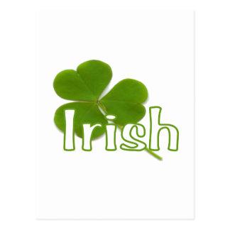 Irish Shamrock Postcard