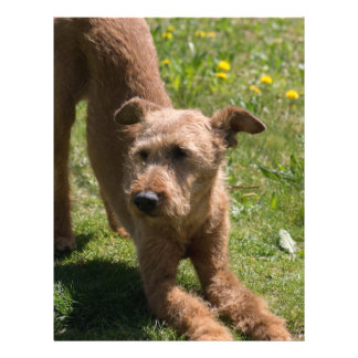 Irish Terrier Yoga 21.5 Cm X 28 Cm Flyer