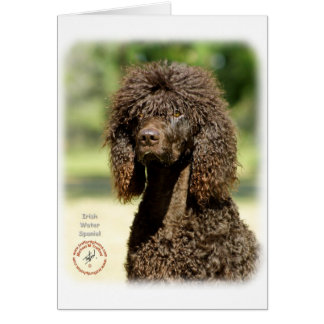 Irish Water Spaniel 9R032D-363 Greeting Card