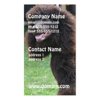 Irish Water Spaniel Business Cards