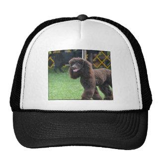 Irish Water Spaniel Hat
